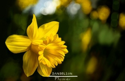 Narcissus   -DANDELION-   Digital Drawing   PENUP