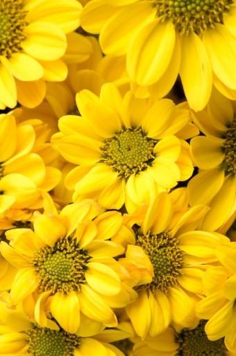 Sunflowers | Peopleperson | Digital Drawing | PENUP