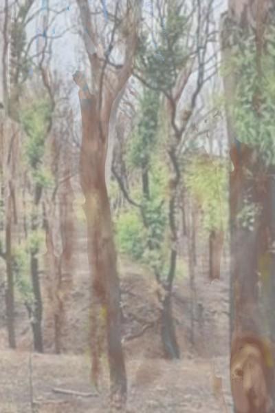 treehouse   regi76   Digital Drawing   PENUP