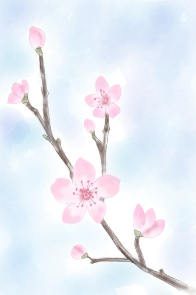 Cherry Blossom  | Sylvia | Digital Drawing | PENUP