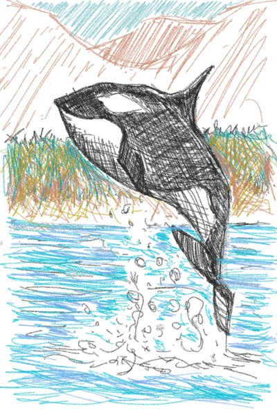 Whale!!!!! ORCA | Tomsar | Digital Drawing | PENUP
