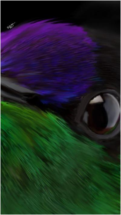 beautiful hummingbird | sally | Digital Drawing | PENUP