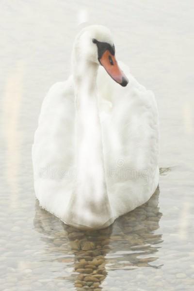 Swan ♡ | MissRebekah12 | Digital Drawing | PENUP
