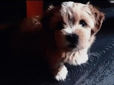 my puppy | iamlucy | Digital Drawing | PENUP