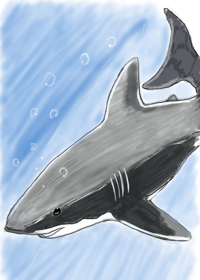 great white  | SoloSketch | Digital Drawing | PENUP