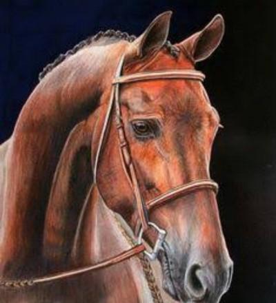 horse  | muni | Digital Drawing | PENUP
