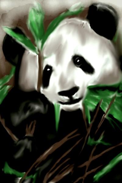 Panda  | K.S.Artist | Digital Drawing | PENUP